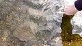 Pools of Water in Granite Outcrops (5571755549).jpg