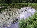 Prírodné jazierko - panoramio.jpg