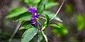 Precious Purple (180124059).jpeg
