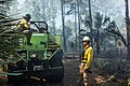 Prescribed fire - Florida Panther November 12 (8227477724).jpg