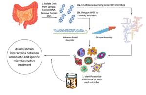 Pharmacomicrobiomics - Image: Process diagram final edited