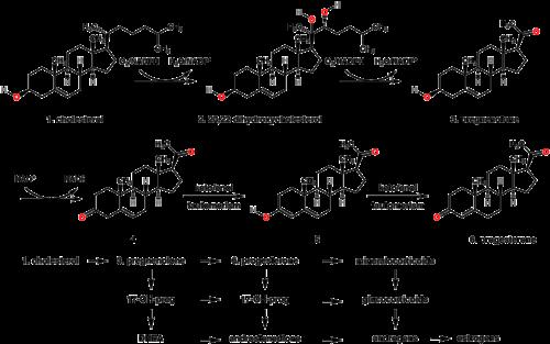 ormoni steroidei pdf
