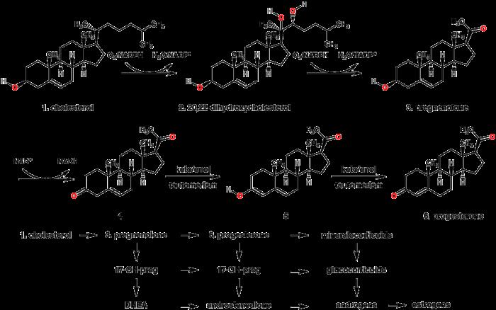 steroids wikipedia side effects