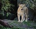 Queen of Beasts (5233445560).jpg