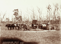 Queensland State Archives 2265 Emptying stripper at winnower with ringed trees in background Roma 1899.png