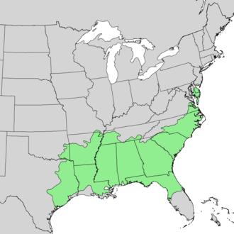 Quercus nigra - Image: Quercus nigra range map 1