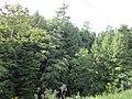 Réserve écologique de Rivière-du-Moulin.jpg