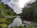 Río Grande Coín 3.jpg