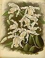 R. Warner & B.S. Williams - The Orchid Album - volume 11 - plate 501 (1897).jpg