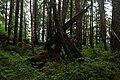 RAIN FOREST CERCA DE MENDELHALL GLACIER - panoramio.jpg