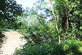 Radkersburg-Murufer 9106.JPG