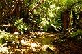 Rain forest near Monroe Beach - panoramio (2).jpg