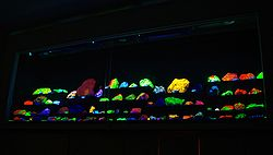 Rows of  rock specimens in a variety of colors, glowing on a black background