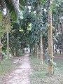 Rajshahi Park 02.jpg