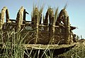 Reed house under construction, Iraq marshes 1978 - panoramio.jpg