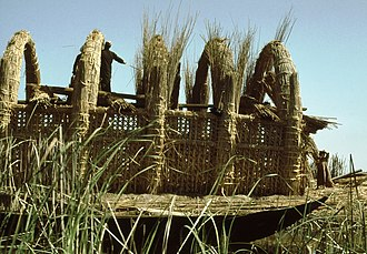 Reed (plant) - A reed house under construction in the marshes of Iraq, 1978