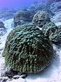 Reef3740 - Flickr - NOAA Photo Library.jpg
