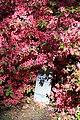Rhododendronpark Bremen 20090513 009.JPG