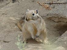 File:Muridae babies.JPG - Wikimedia Commons
