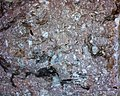 Rhyolite 01 10x (39669396151).jpg