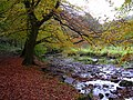 River Ogden in Autumn - geograph.org.uk - 1550641.jpg