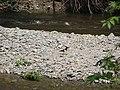 River Teviot - geograph.org.uk - 553854.jpg