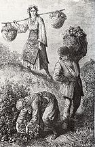 Rose-picking in the Rose Valley near the town of Kazanlak in Bulgaria, 1870ies, engraving by Austro-Hungarian traveller F. Kanitz