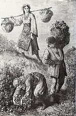 Rose-picking in Bulgaria 1870ies.jpg