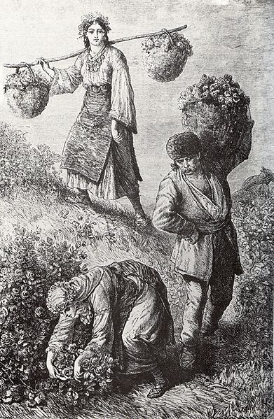 File:Rose-picking in Bulgaria 1870ies.jpg