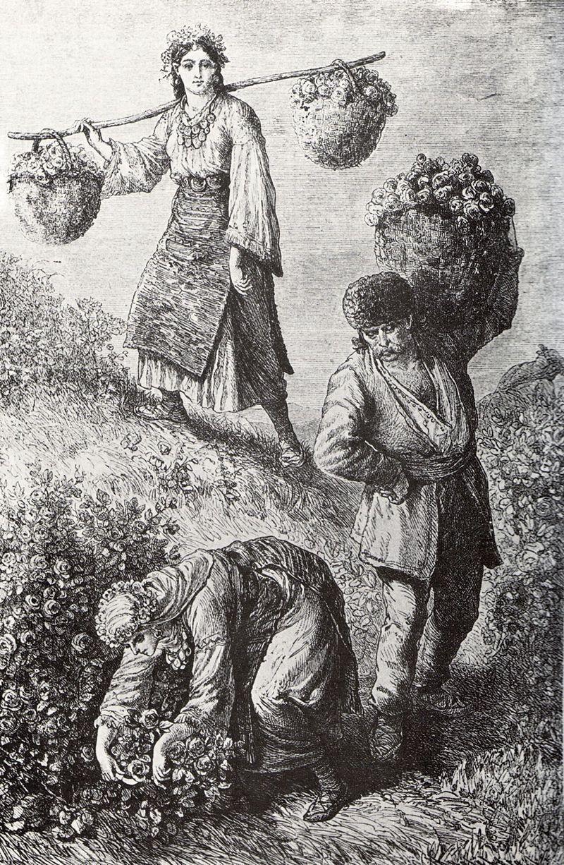 Збирання троянд в долині біля Казанлику, 1870-і роки, гравюра австро-угорського мандрівника Фелікса Філіпа Каніца.