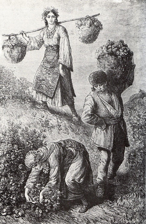 Rose-picking in Bulgaria 1870ies