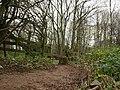 Roseland Wood near Scarcliffe - geograph.org.uk - 287002.jpg