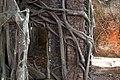 Ross Island, Andamans, Banyan tree roots on red brick wall.jpg