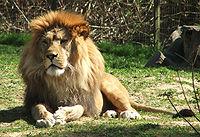 Samiec w zoo