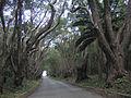 Saint Andrew, Barbados 035.jpg
