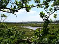 Saltmarsh on the Beaulieu River - geograph.org.uk - 450099.jpg