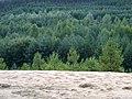 Sand vs. Wald - panoramio.jpg