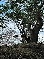 Sao Tome 42 (16248978845).jpg