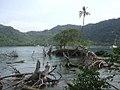 Sapzurro Beach driftwood (Colombia).jpeg