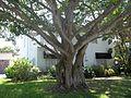 Sarasota FL Whitfield Estates-Broughton St HD 7211-03.jpg