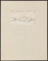 Saurus spec. - 1700-1880 - Print - Iconographia Zoologica - Special Collections University of Amsterdam - UBA01 IZ14600185.tif