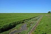 Schleswig-Holstein, Neufelderkoog, Biosphärenreservat Schleswig-Holstein Wadden Sea and adjacent areas NIK 7191.jpg