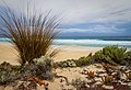 Seaside Garden - Curtar Rocks Port Lincoln National Park - South Australia.jpg