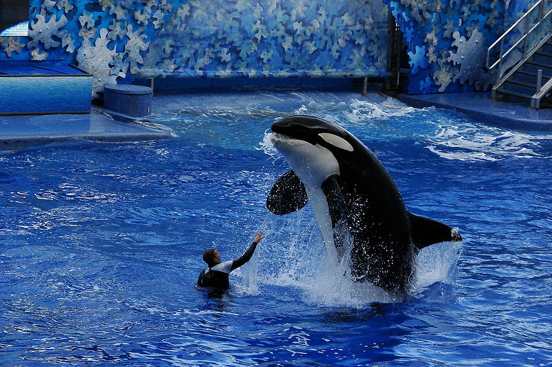 see: Sea World, Orlando Florida