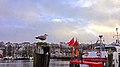 Seemöwe auf einem Holzpoller im Flensburger Hafen. - panoramio.jpg