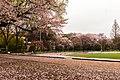 Seikei University (18).jpg
