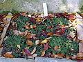Sempervivum montanum subsp. stiriacum - Botanischer Garten Braunschweig - Braunschweig, Germany - DSC04368.JPG