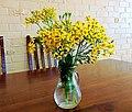 Senecio angulatus cut flowers.jpg
