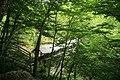 Sentinel Pine Bridge (3371392627).jpg