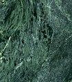 """Serpentinite (""""green marble"""") (14618888487).jpg"""